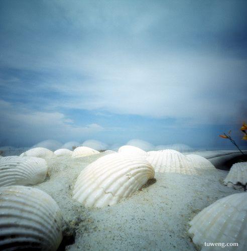 贝壳 大海的泪花 - 火凤凰 - hfh9989的博客