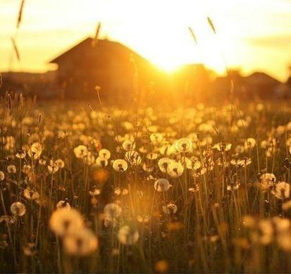 像阳光一样生活