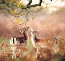 奔跑的小鹿