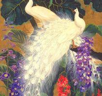 白孔雀之美