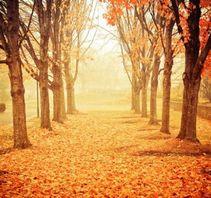 迷失在梦幻般的森林里