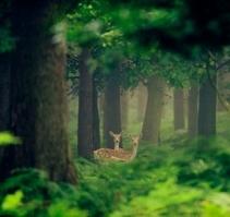 林中的精灵