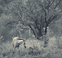 静谧的灰色摄影