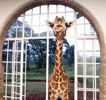 把家搬进动物园