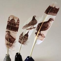 精细的羽毛鸟插图