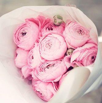 唯美的花之物语
