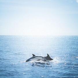 夏天,想陪你去看海
