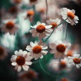 花的唯美LOMO图片
