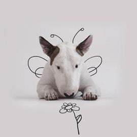 Jimmy狗狗趣味可爱插画
